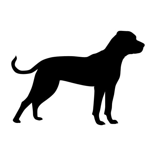 American Bulldog Bügelbilder