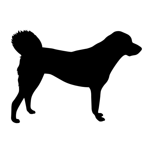 Anatolischer Hirtenhund Bügelbilder