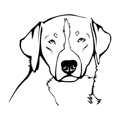 Appenzeller Sennenhund Bügelbilder