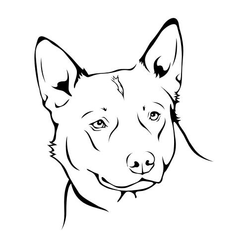 Australian Cattle Dog Bügelbilder