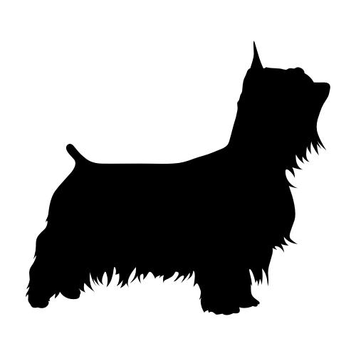 Australian Silky Terrier Bügelbilder