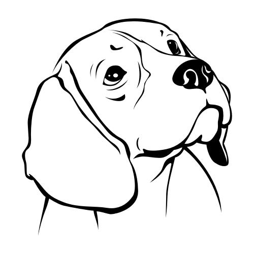 Beagle Bügelbilder