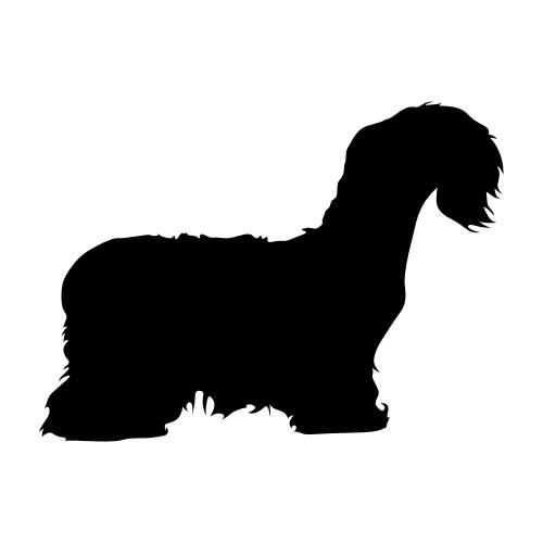 Cesky Terrier Bügelbilder