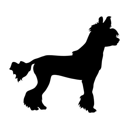 Chinesischer Schopfhund Bügelbilder