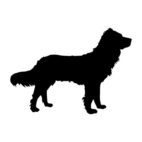 Deutscher Wachtelhund Wandtattoos