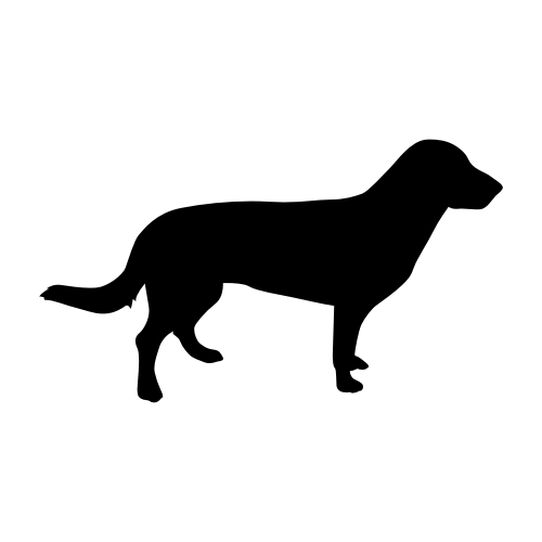 Entlebucher Sennenhund Wandtattoos