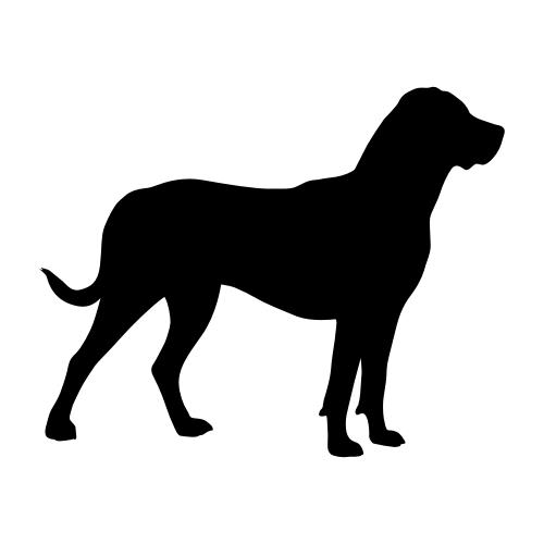 Großer Schweizer Sennenhund Wandtattoos